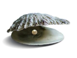 opened seashell