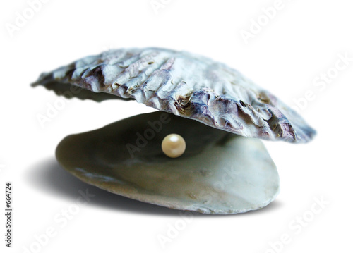 sea shell pearl