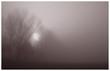 nebel - 665194