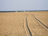 sand tracks poster