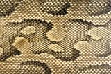 snakeskin-texture-