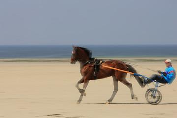 trotteur sur la plage