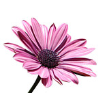 Fototapeta zwolniony - obiekt - Kwiat