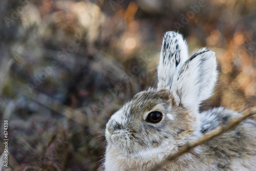 canvas print picture portrait of a bunny