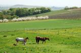 grazing horses poster