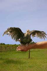 opened winged turkey