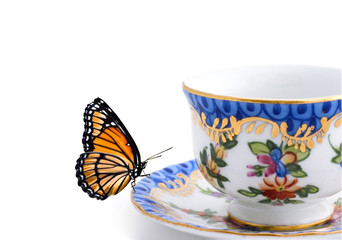 butterfly on a tea cup