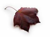 single leaf poster