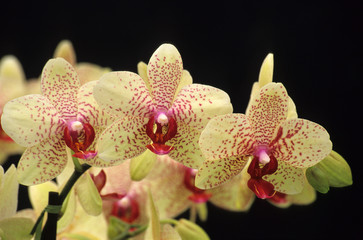 trio of orchids