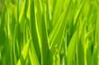 Quadro green grass