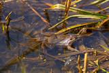 spring frog poster