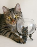 grey cat and glass cup poster