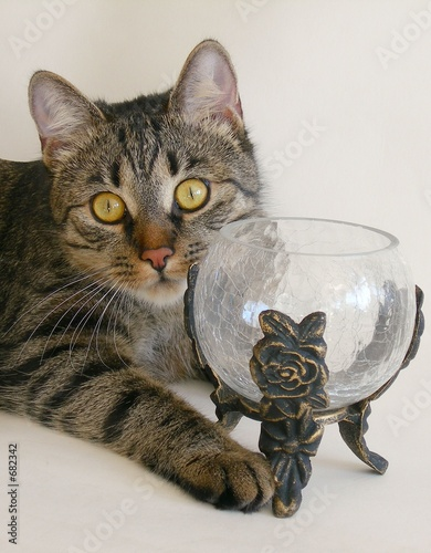 poster of grey cat and glass cup