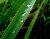 drops on grass. after rain. poster