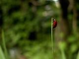 ladybird ladybug climb poster