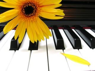 petal piano