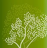 tree - spring