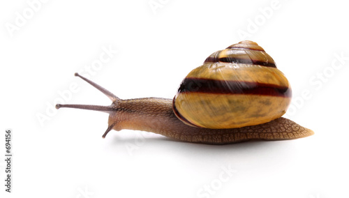 Leinwandbild Motiv snail isolated on white background