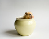 hamster in the pot poster