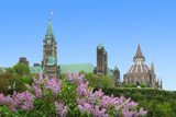 canadian parliament building with lilacs poster