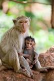 monkey feeding poster