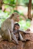 monkey feeding her baby poster