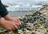 moules à marée basse poster