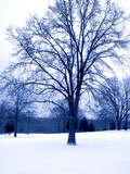 blue tone winter tree poster