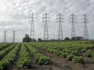 champs et poteaux électriques