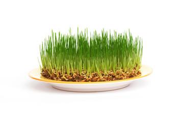 fresh grain on a plate