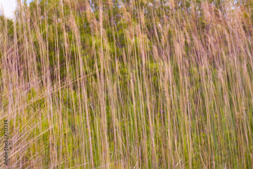 cattails swaying in the breeze