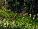 madère jardins poster