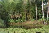 rain-forest, miami, florida poster