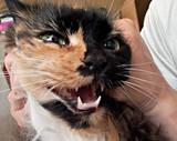 mew cat poster