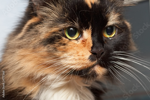 poster of sad cat
