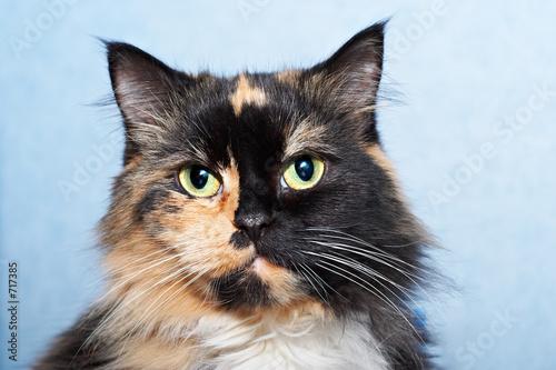 poster of cat portrait