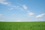 wheaten field, landscape poster