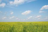 blossoming landscape poster