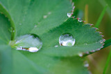 water droplet on a leaf poster