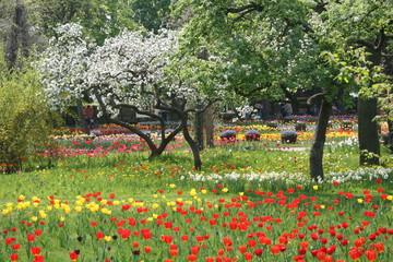 bunte frühlingswiese mit tulpen