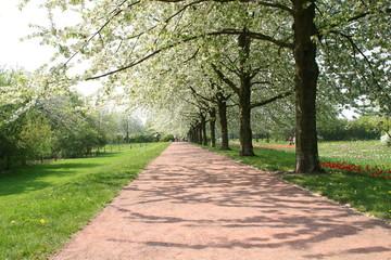 spazierweg entlang einer bunten frühlingswiese
