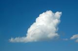 swan cloud poster