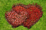 heart symbol flowers on grass poster