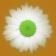 icone 7