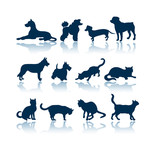 dogs and cats silhouettes poster