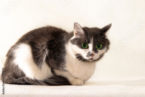poster of gray-white cat - 2