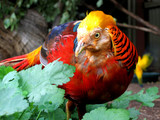 bird of colour poster