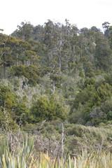 westland rainforest