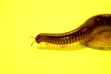 brown worm on a yellow background