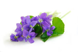 violets on white background poster